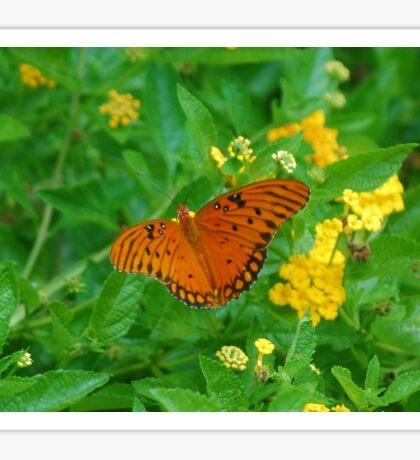 Orange butterfly on yellow flowers Sticker