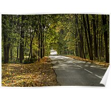 The road between yellow trees Poster