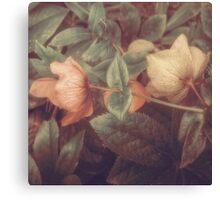 SECRET FLOWERS OF PARADOX Canvas Print