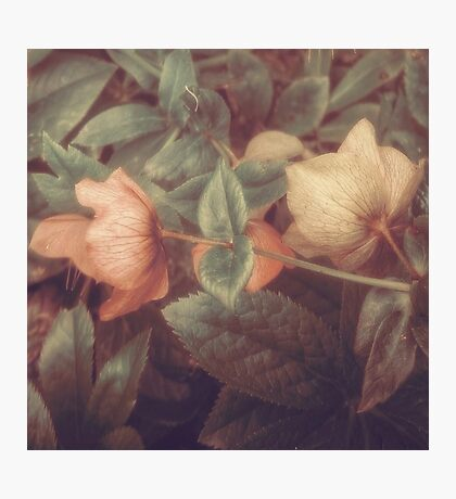 SECRET FLOWERS OF PARADOX Photographic Print
