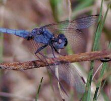 Blue dragonfly on a twig Sticker