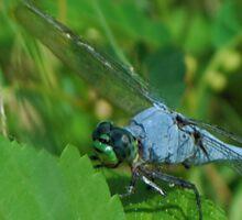 Blue dragonfly on a leaf Sticker