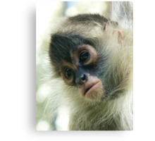 Pensive Young Spider Monkey Canvas Print