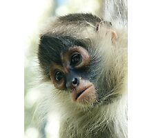 Pensive Young Spider Monkey Photographic Print