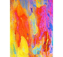 Summer Eucalypt Abstract 19 Photographic Print