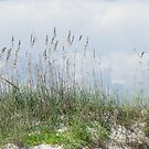 Sea Oats by Bob Hardy