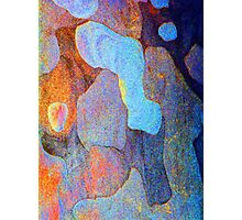 Spring Eucalypt Abstract 11 Photographic Print