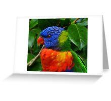Rainbow Lorikeet Deep In Thought Greeting Card