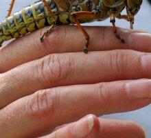 Lubber grasshopper and friend Sticker