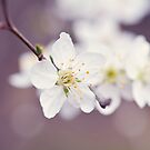 Blossoms by Tracy Jones