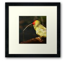 Star Finch At Nesting Time Framed Print