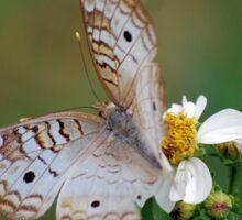 White butterfly on Spanish Needles 2 Sticker