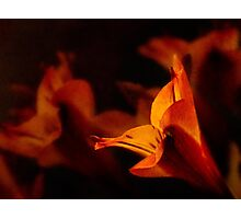 Lily in autumn colors Photographic Print