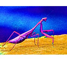 Fantasy Mantis Dance Photographic Print