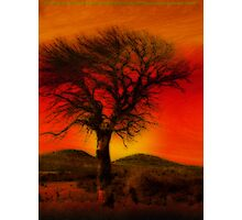 Oil Pastel Tree in Sunset (28,387) Photographic Print