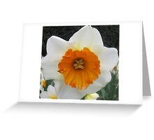 THE FACE OF A DAFFODIL Greeting Card