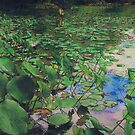 In The Lilly Pads by Randy Sprout