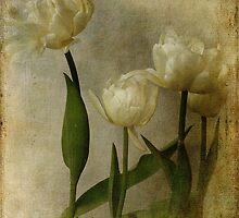 Tulips by Chris Armytage™