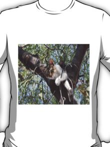 Bi-Color Tabby Cat In Tree 5 T-Shirt