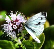 Butterfly ......... by lynn carter