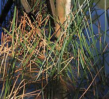 Reeds beneath the Jetty by LisaGHunter
