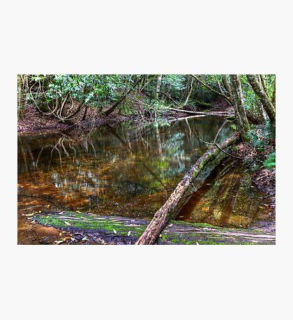 Downstream - Rainforest - NSW - Australia Photographic Print