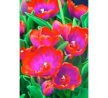 Fantasy Tulip Abstract Photographic Print