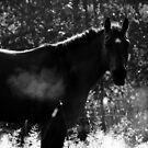 11.9.2014: Horse, September Morning by Petri Volanen