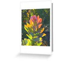Eucalypt Leaf Tips Abstract Greeting Card