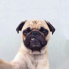 Pug Life by ernieandbert