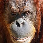 A Thoughtful Orang-utan by Margaret Saheed