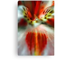 A Red Peruvian Lilly - Color and Form -- Bridgton,  Maine Canvas Print
