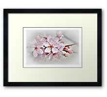 Blossom part 1 Framed Print