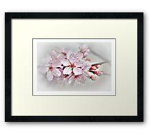 Blossom part 1 Framed Print