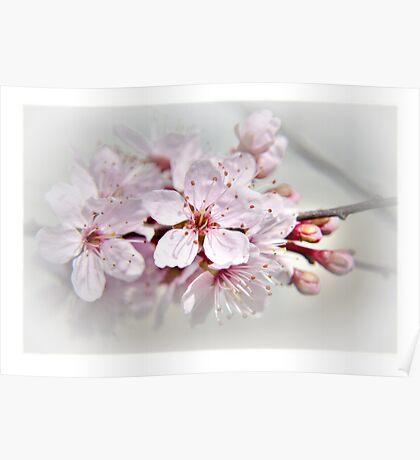 Blossom part 1 Poster