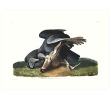 Black Vulture - John James Audubon  Art Print