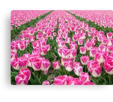 Dutch Tulips part 3 Canvas Print