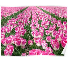 Dutch Tulips part 3 Poster