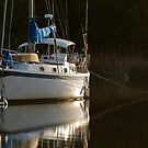 Sunset Sailboat by TJ Baccari Photography
