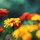 Marigolds Galore by KasiaDesign