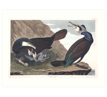 Great Cormorant - John James Audubon Art Print