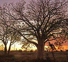 baobab tree by Elliot62