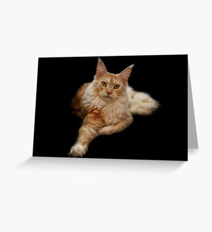 Maine Coon Lady Greeting Card