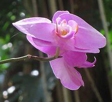 Purple Tree Flower by edlineuser