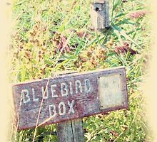Bluebird Box by Francis LaLonde