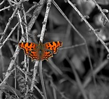 butterfly by ljbphotography