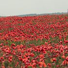 Poppies and Hardy's Monument by Murray Breingan