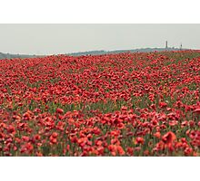 Poppies and Hardy's Monument Photographic Print