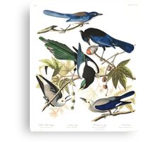 Magpies, Jays & nutcrackers - John James Audubon Canvas Print