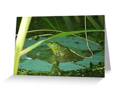 Frog on a Lily Pad  Greeting Card